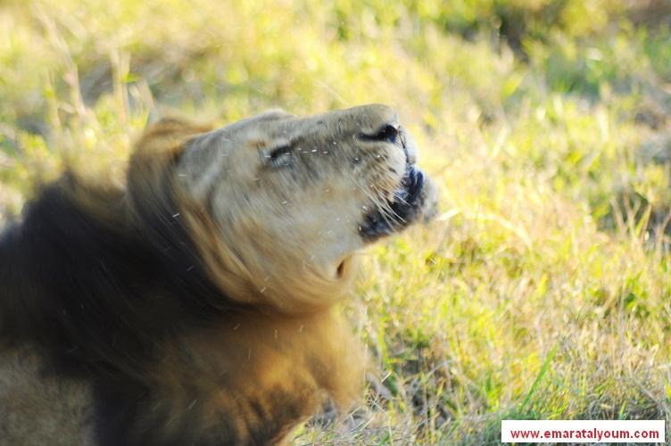 بالصور أفريقيا 83.jpg