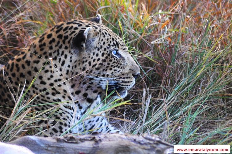 بالصور أفريقيا 88.jpg