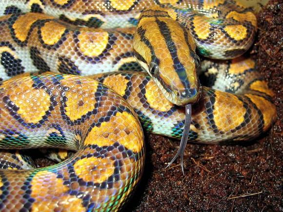 الثعابين 169.jpg