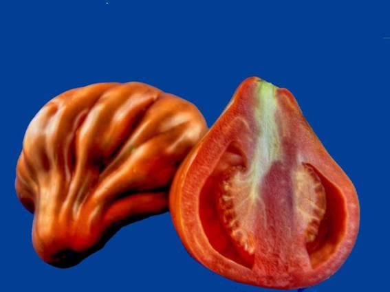 الفاكهة 47.jpg