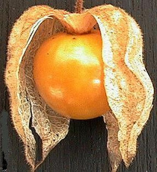 الفاكهة 50.jpg