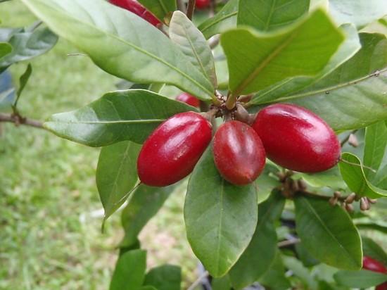 الفاكهة 52.jpg