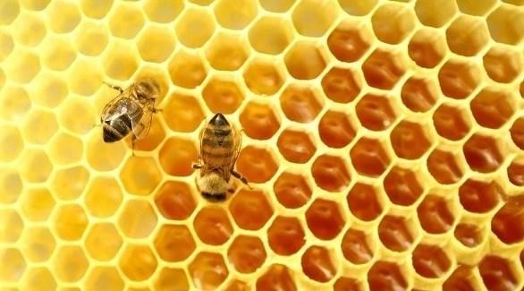 """""""صمغ النحل"""" 9.jpg"""