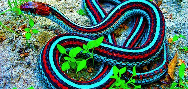 الثعابين 205.jpg