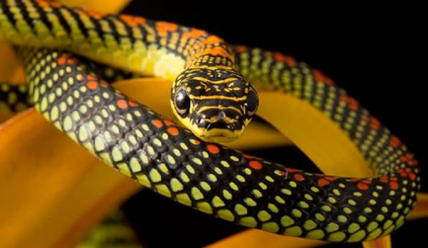 الثعابين 211.jpg