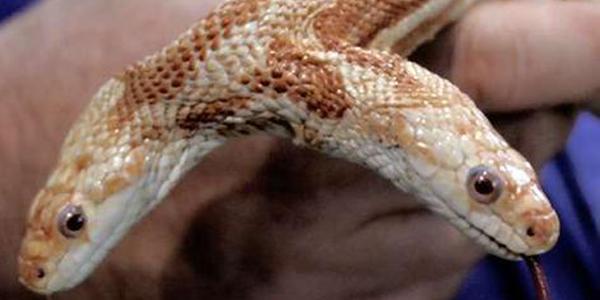 الثعابين 214.jpg