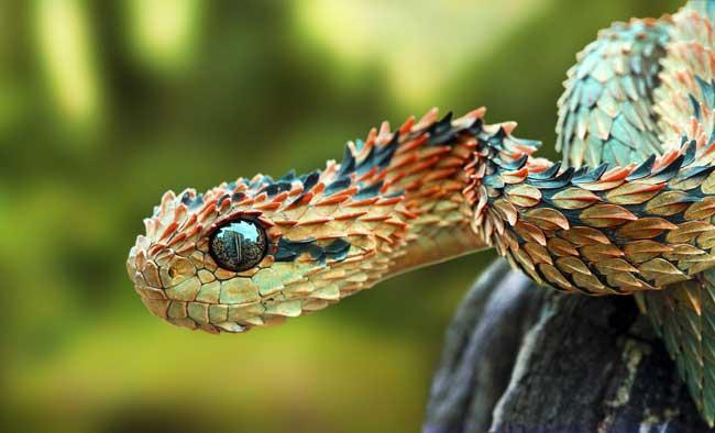 الثعابين 221.jpg