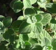 فوائد الزعتر لعلاج برد الشتاء وتسهيل الهضم