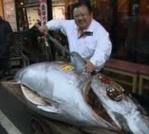 أغلى سمك هو سمك التونة الياباني