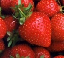 باحثون أميركيون الفراولة تخفف من أعراض السكري