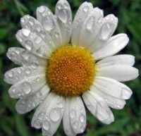 أهم  الأعشاب الطبيعية للعناية بالشعر وتقويته
