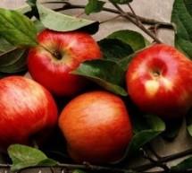 هل التفاح مفيدٌ للجسم؟